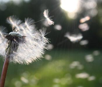Gezonde lucht, waarom is gezonde lucht belangrijk? | Ventilatie Techniek Brabant